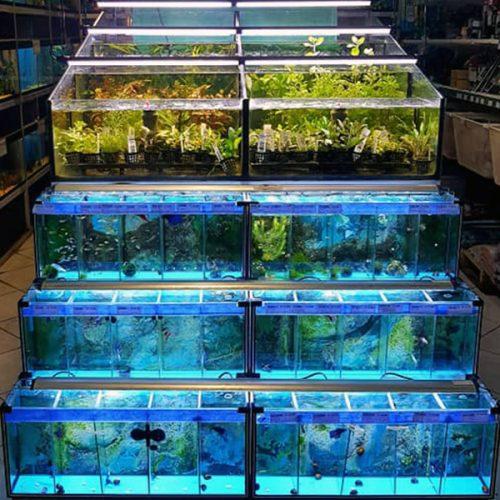 Aquaplantarum